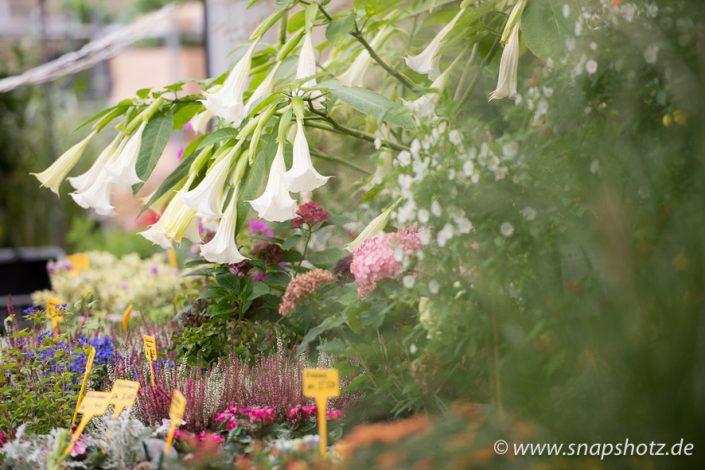 Eine große Vielfalt an Pflanzen