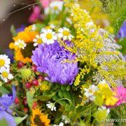 Schöne Blumen von Blumen Rühmann